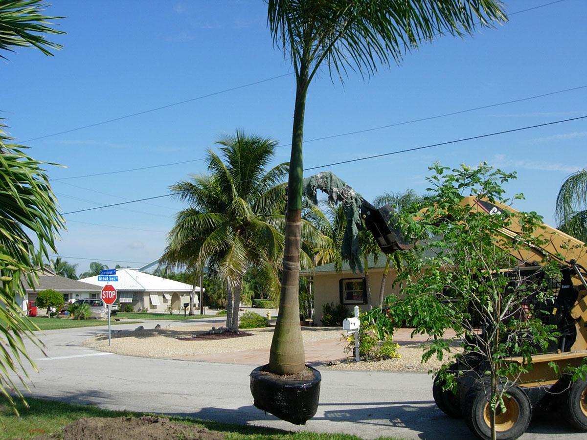 Palm Tree Removal Costs - Real Prices & How to Save!